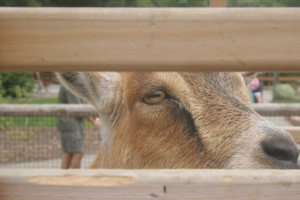 donkey zoo